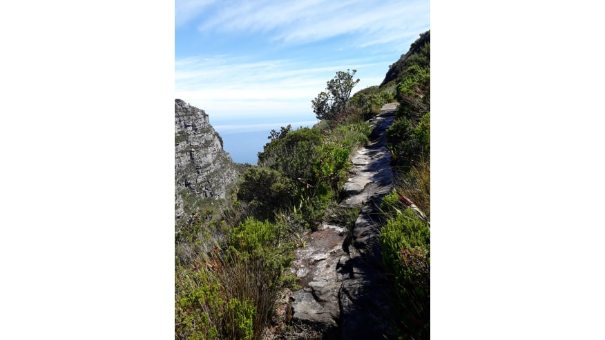 Hidden paths up Table Mountain