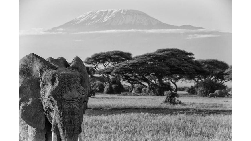 Earn the Best of Kenyan Wildlife in the Lap of Kilimanjaro