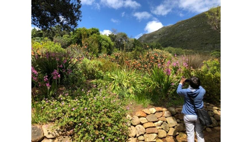 Lush plants and flowers - Kirstenbosch Botanical Gardens