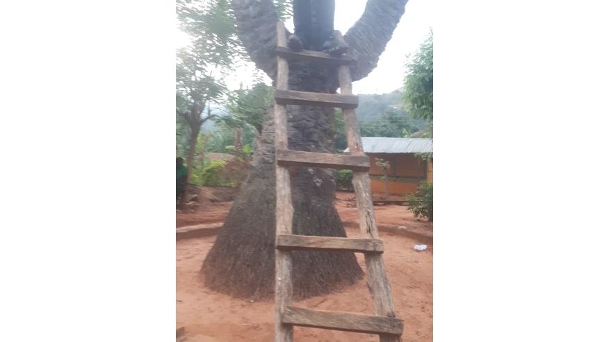 Mysterious 3 Headed Palm Tree at Boti