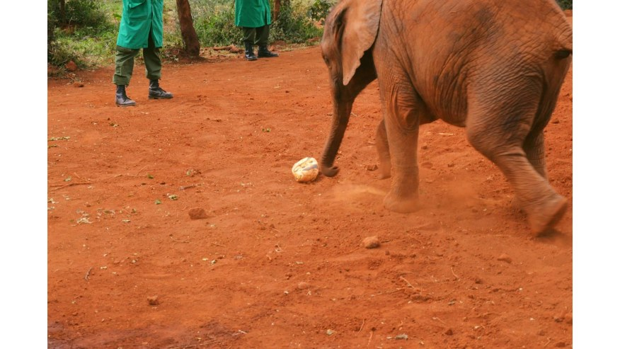 David Sheldrick elephant sanctuary