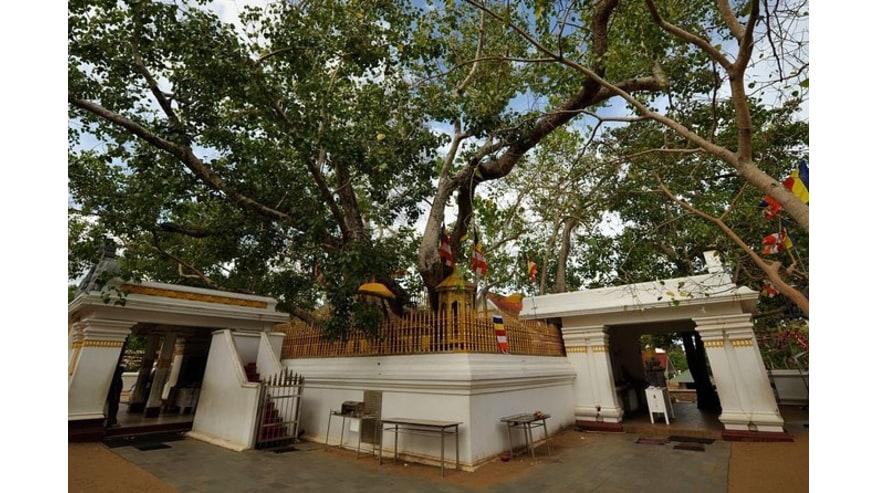 Jaya Sri Bodhi