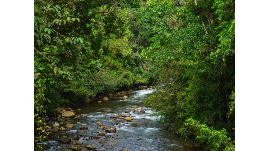 Narrow streams inside the Sinharaja Forest.