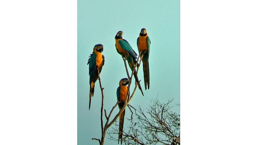 Encuentro Con Los Aves De Colores