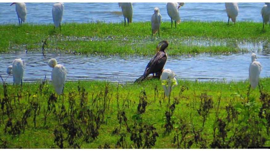 native birds of Yala