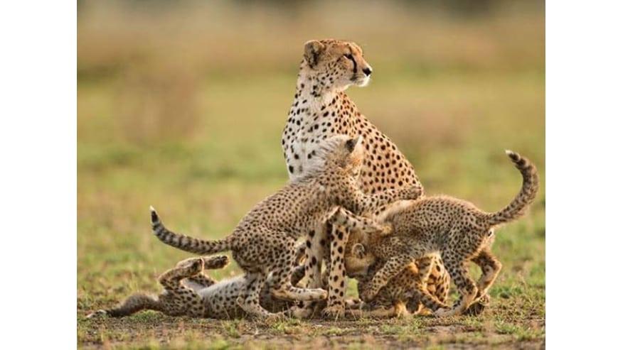 Wildlife in its natural habitat