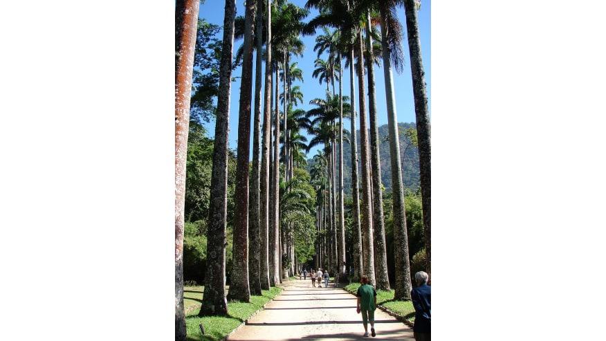 Palm trees in the Botanical Garden of Rio de Janeiro