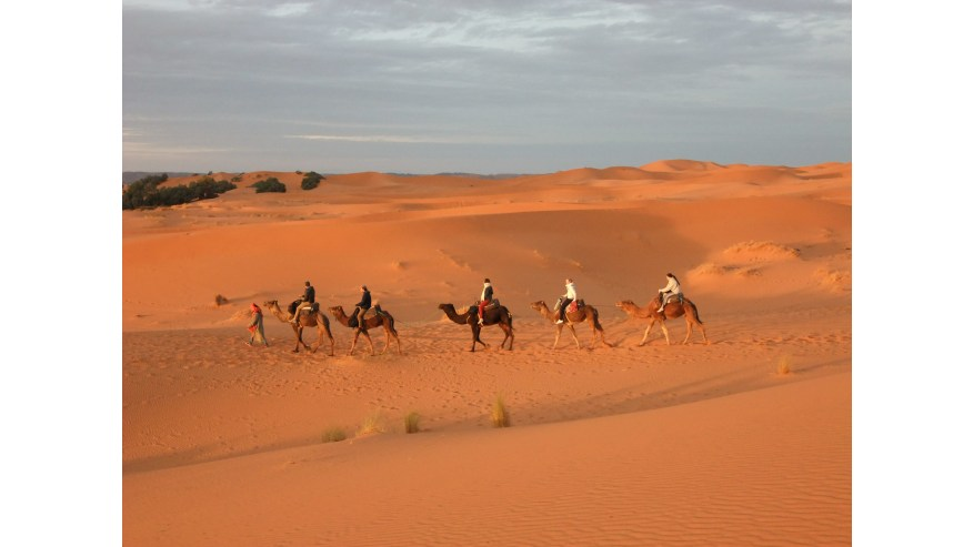 Camel rides in the Sahara Desert