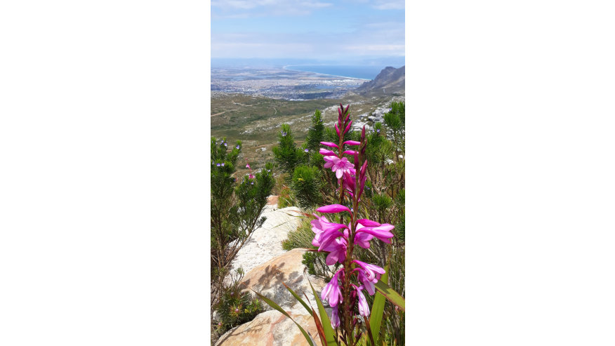 The beauty of the local Fynbos