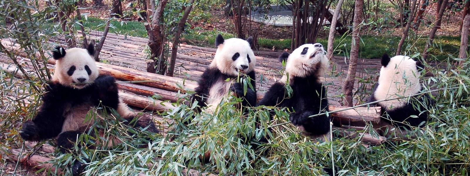Chengdu-Tour-Guide