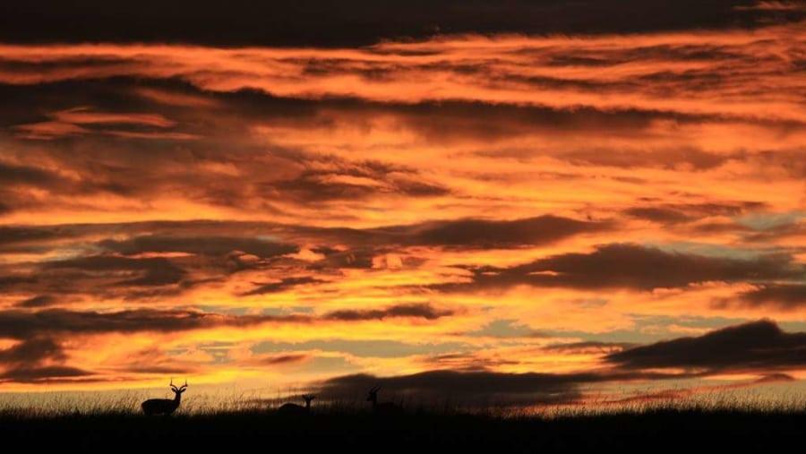 impala at sunset