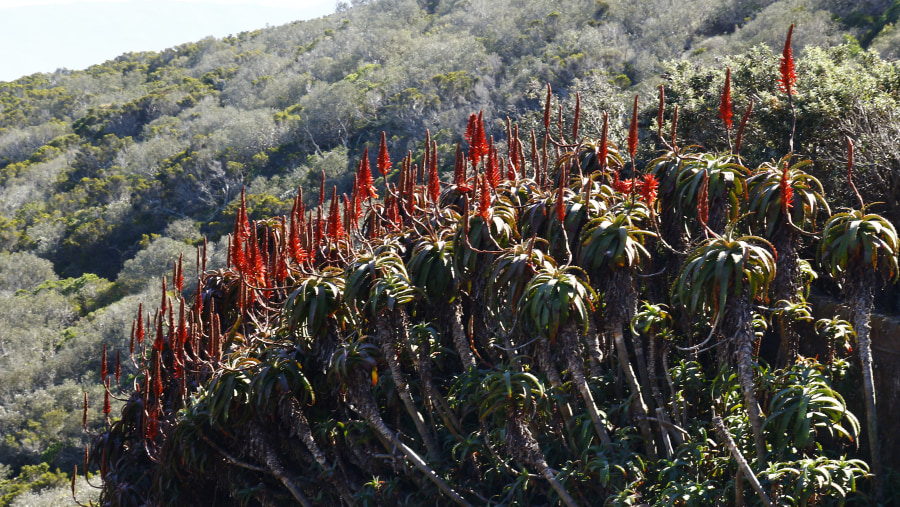 The beauty of Nature on the Cape Peninsula Route