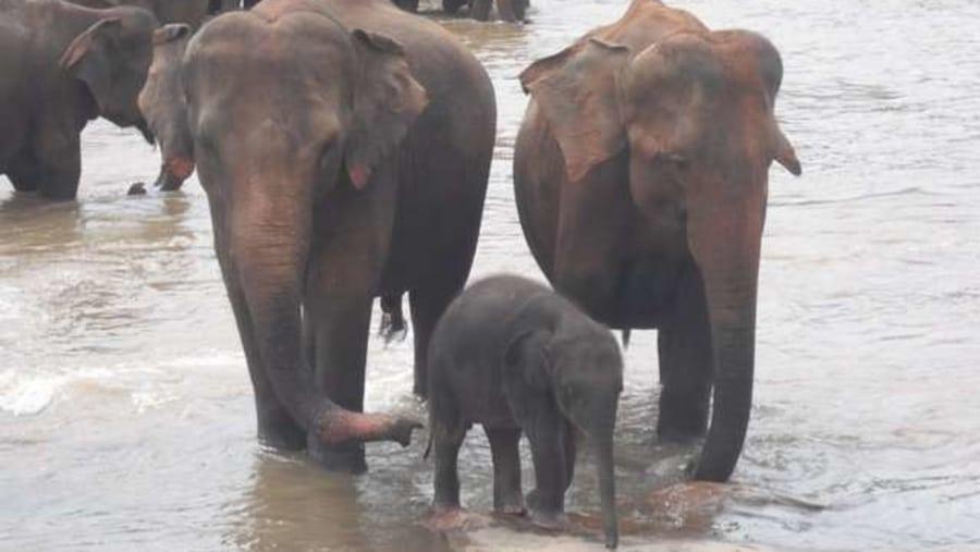 elephant orphange