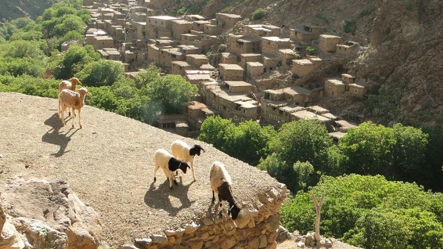 Trekking Berbere Villages In Atlas Mountains