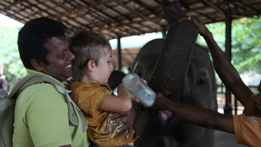 Baby feeding  Baby elephant