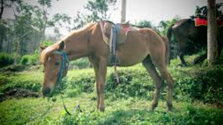 Horse Carriage Village tour and Borobudur,it's so wonderful