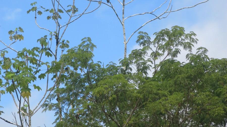 The beautiful Peruvian Amazon!