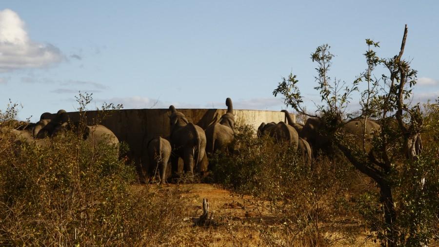Elephant drink water