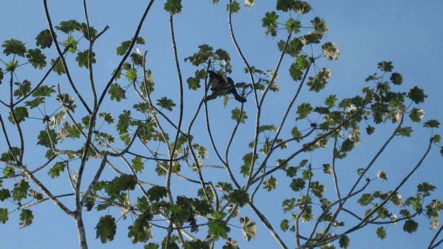 tree toad sloth