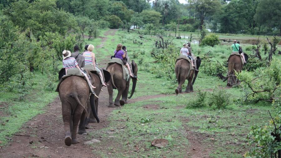 Guests, elephant back safari