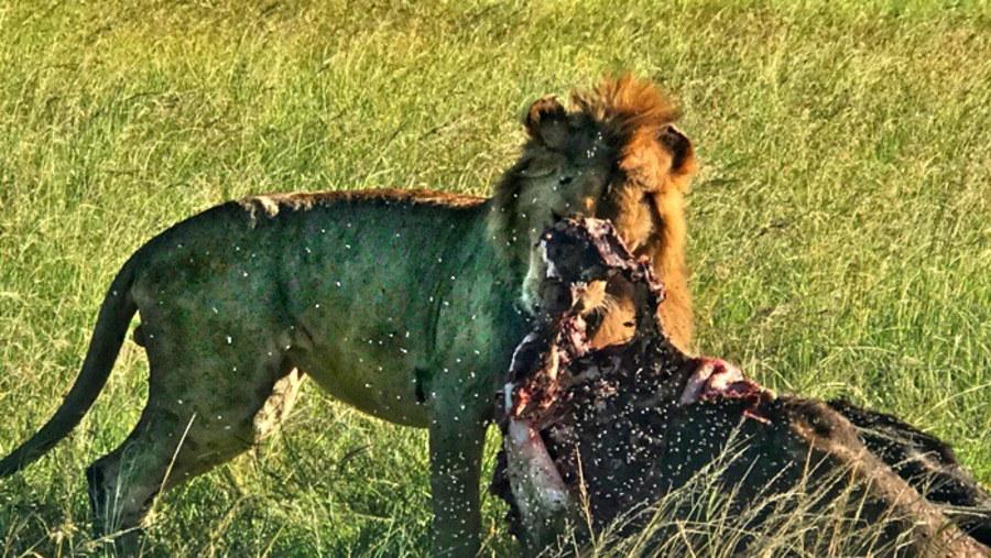 Kenya travelers - Masai Mara