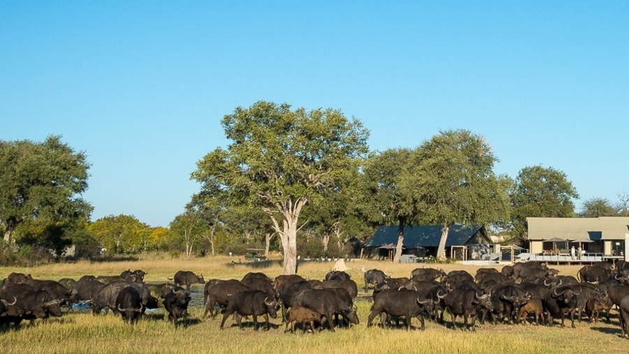 Southern African Tours