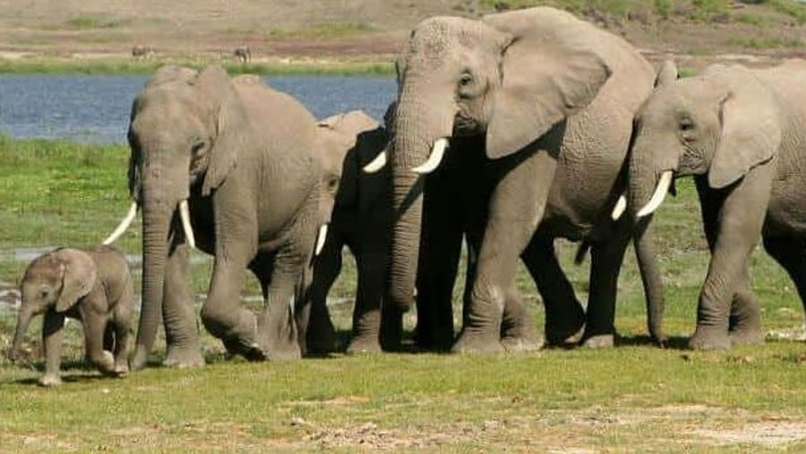 herd of elephants in the plains