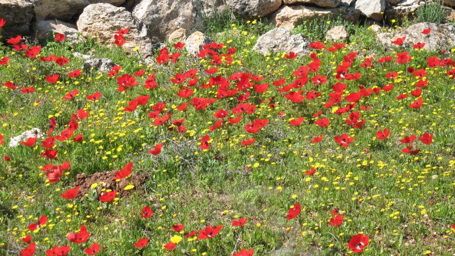 Judean hills - west Jerusalem