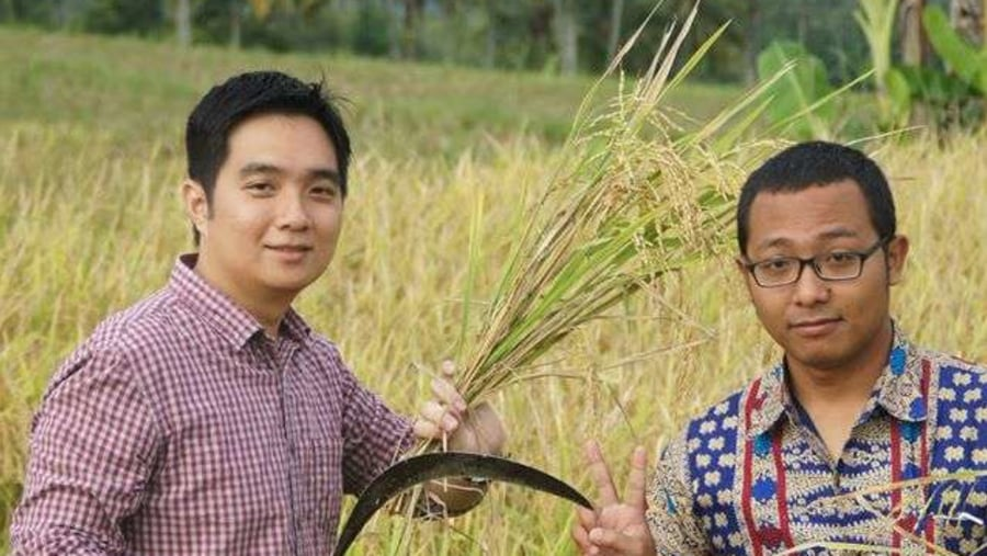 In The Rice Field Plantation