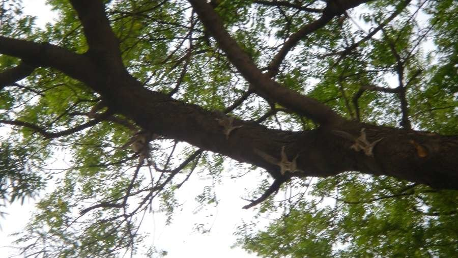 Squirrels queuing up for the B&B Homestay's scrumptious breakfast
