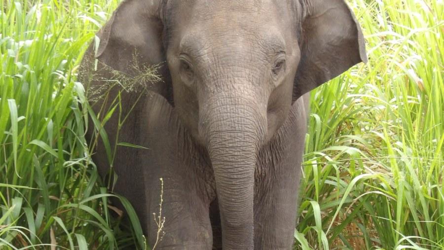 Great Journey in Sri Lanka