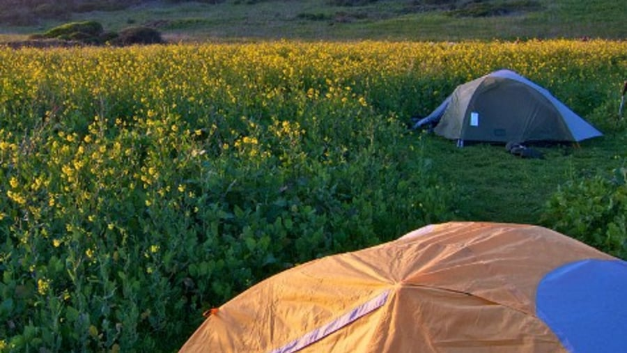 Point Reyes campsite