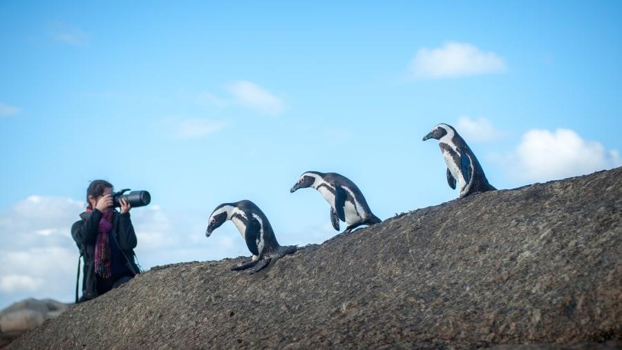 Penguins ahoy