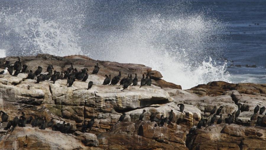 GLAsafaris, Cape Peninsula Route
