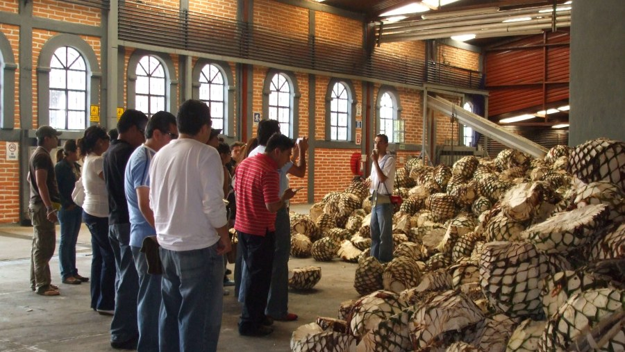 Puebla students learning the process of Tequila making at Tequila, Jalisco