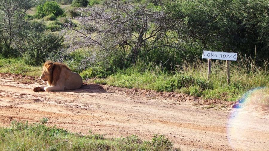 Darlington Chiambiro Chaonwa