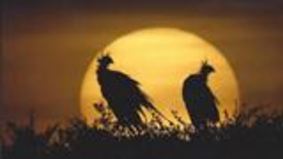 sunset with vultures in the sun
