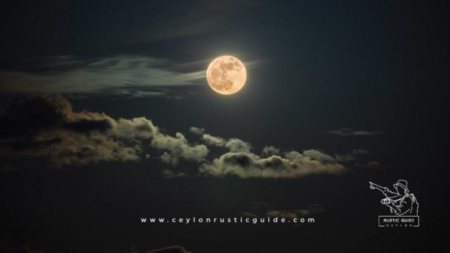 Nacturnal Tour Guide Sri Lanka