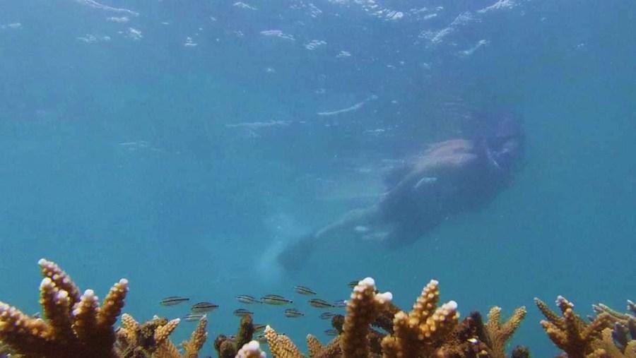 explore amazing coral reef