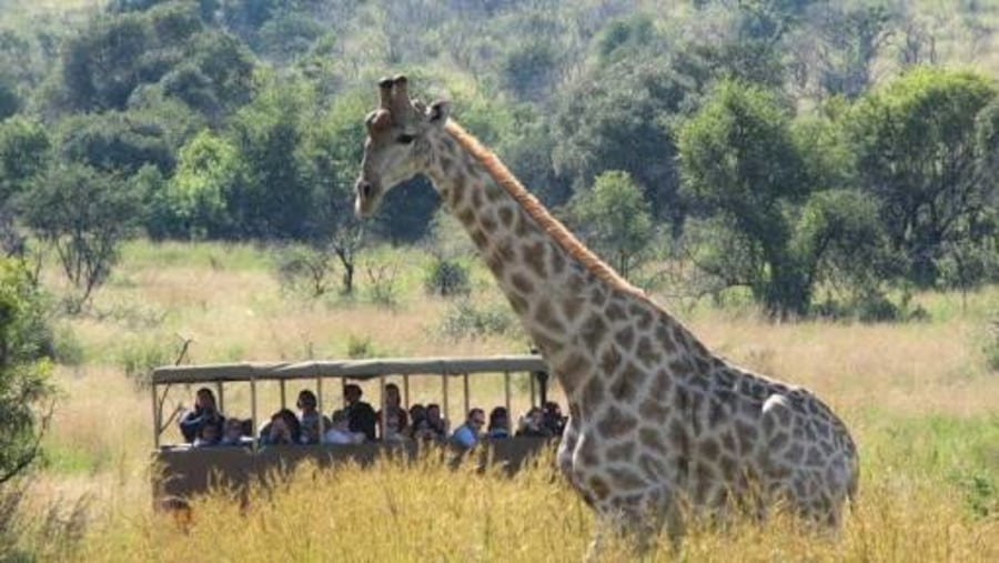 Phaphama Tour and Shuttle Services