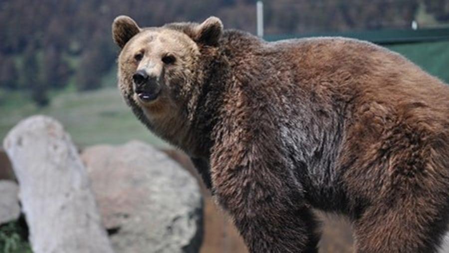 Bear Sanctuary - Tours in Brasov