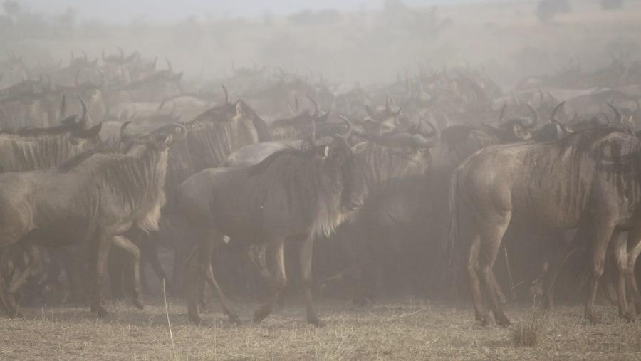 Best Safari guide and company in Tanzania