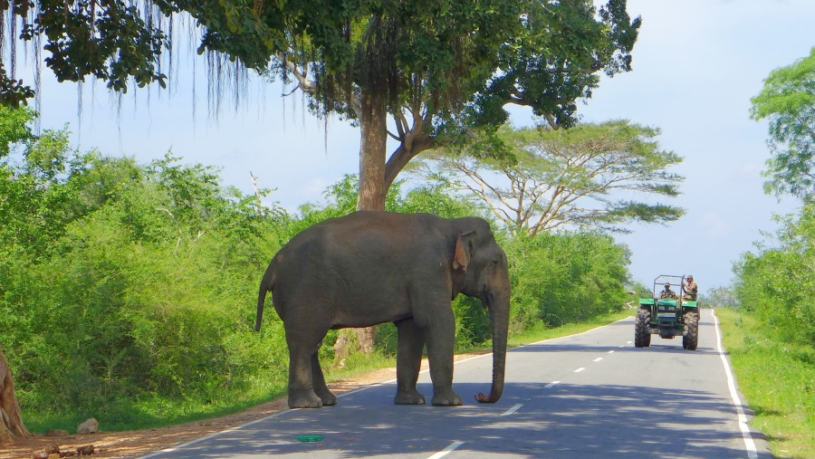 A Safe Driver is Very Important in Sri Lanka