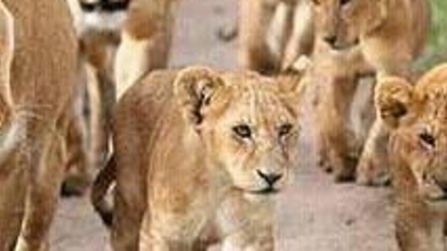 16days Tanzania Safari