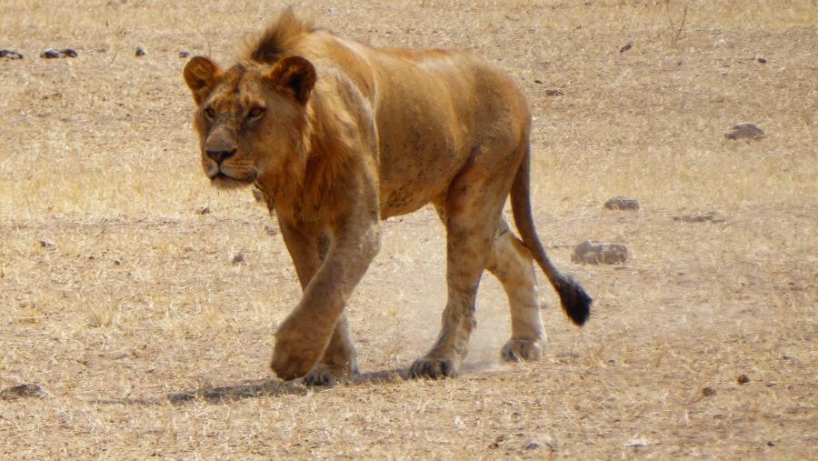 Perfect Safari in Serengeti, Ngorongoro Crater, Tarangire and Lake Manyara