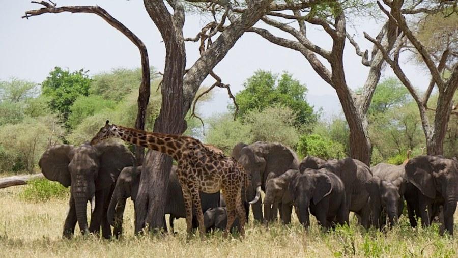 Three Safaris, All Great