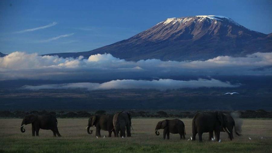 elephants under kilimanjaro