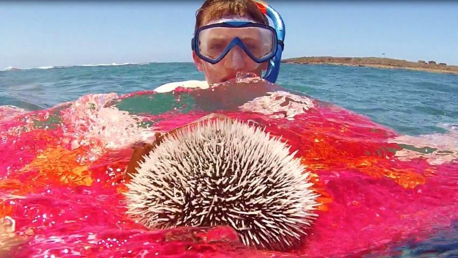 Joseph with whitw sea urchin