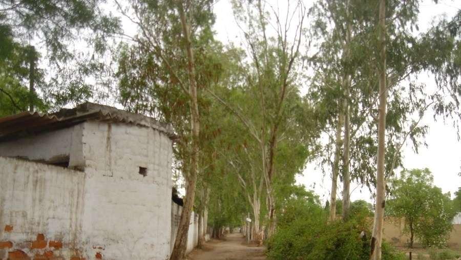 Eucalyptus Avenue