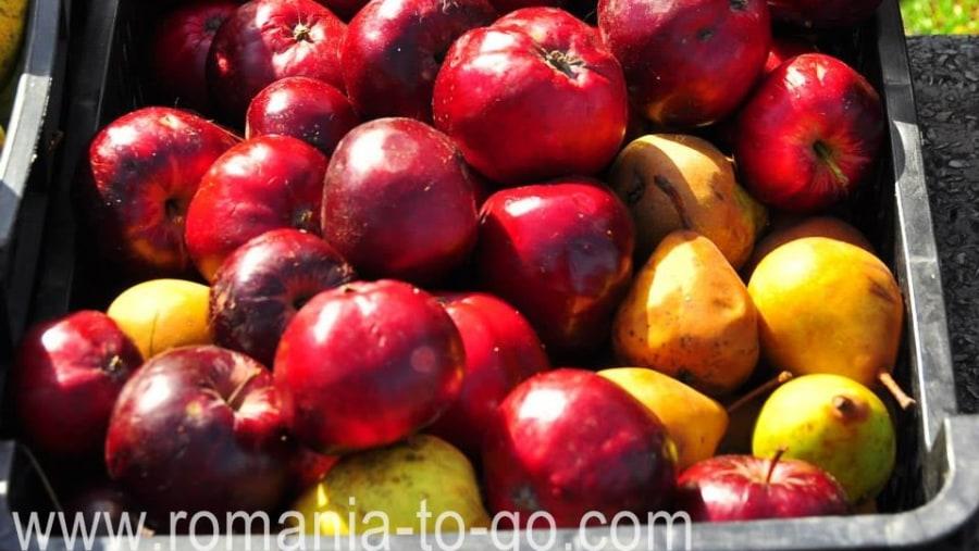 Fresh local apples